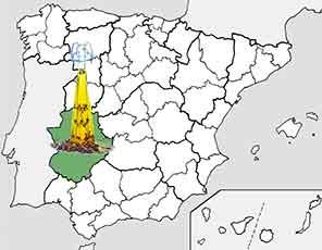 Aceite de oliva Extremadura