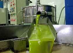 Extrayendo el aceite de oliva en el proceso de elaboracion