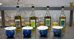 cata del aceite de oliva